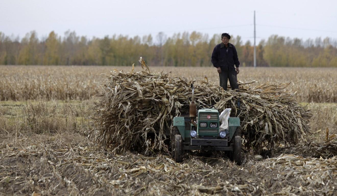 """A China quer produzir etanol a partir da celulose, como milho, em um """"caminho estrutural"""" até 2025. Foto: Reuters"""