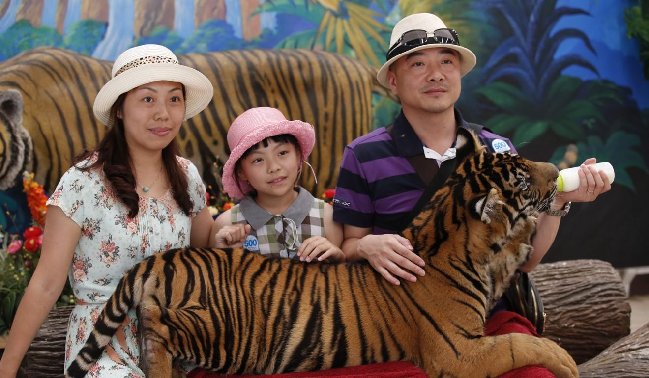 The vile craze for 'drugged tiger' selfies in Thailand