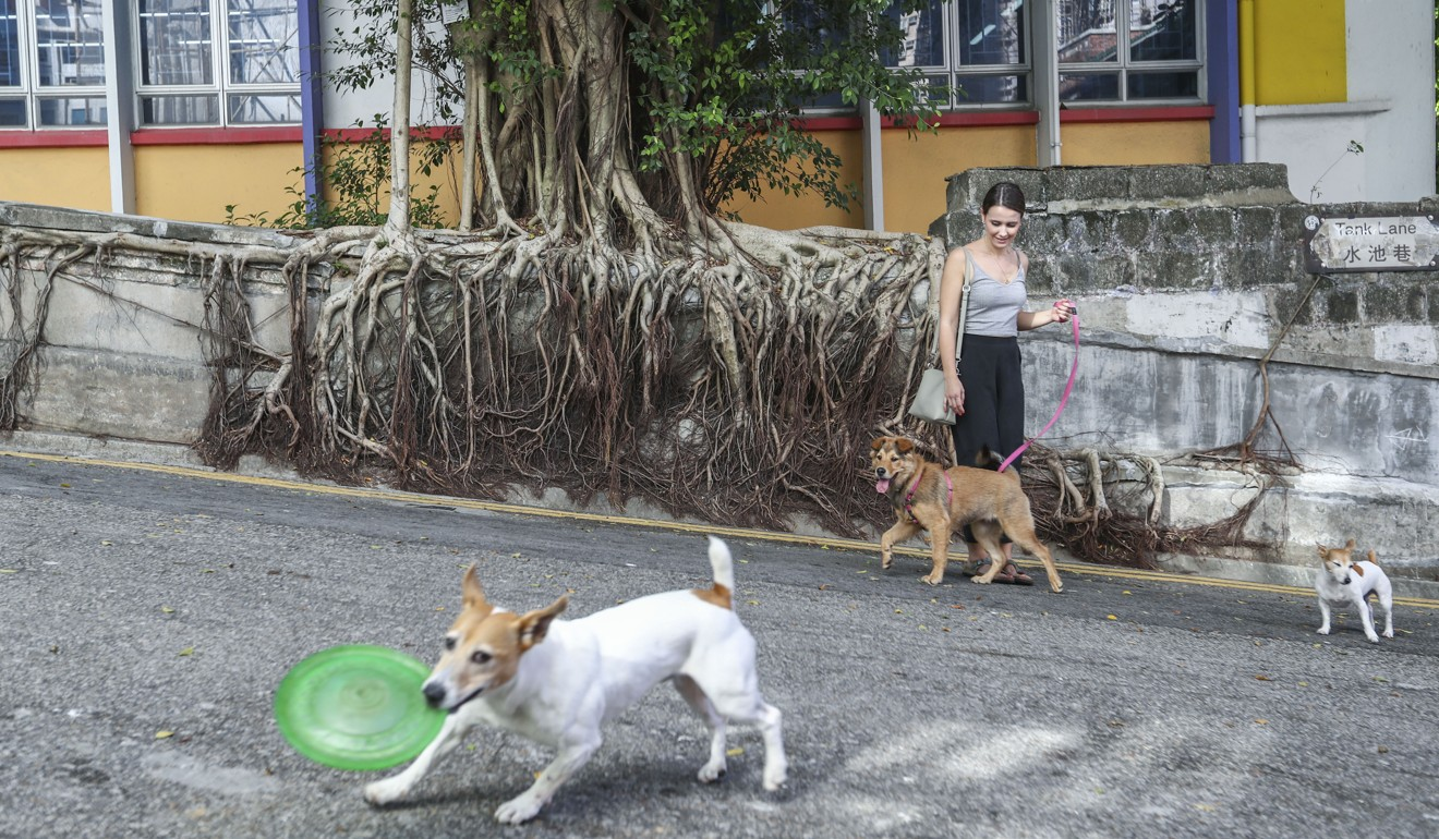 Hong Kong dogs enjoy a walk in Sheung Wan. Photo: Nora Tam