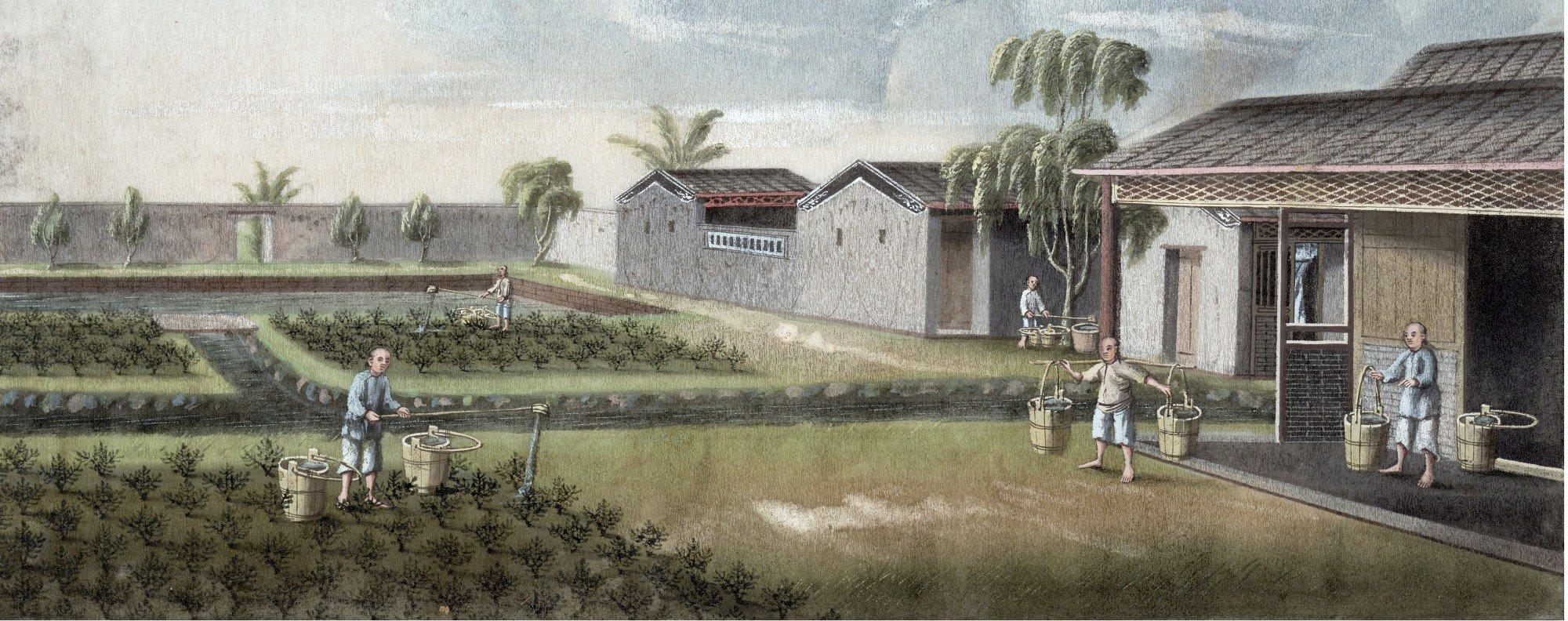 A tea estate in 19th-century China. Picture: Alamy