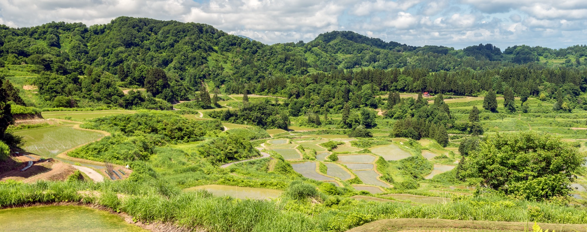 Rice terraces in Hoshitoge, in Niigata prefecture, in Japan.