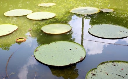 Left: lily pads in the botanical gardens.