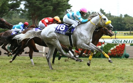 Snow Dragon wins the Sprinters Stakes last month. Photo: Japan Racing Asssociation