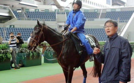 Japanese raider Satono Crown is schooled in the parade ring after a gallop on the turf at Sha Tin on Friday as trainer Noriyuki Hori accompanies his charge. Photos: Kenneth Chan