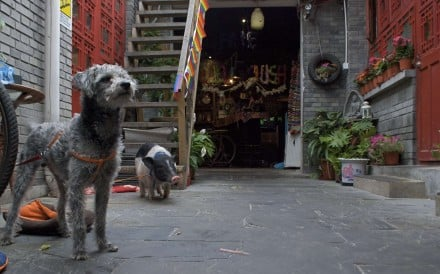 The entrance to Chilli Crush, with resident dog and pig greeting patrons, in Beijing. Photos: Bibek Bhandari.