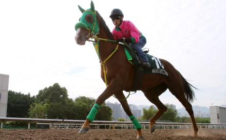 Nuovo Record gallops on the all-weather track at Sha Tin on Tuesday morning. Photos: Kenneth Chan