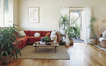Not only can plants improve a home's looks, they are good for health and help clean the indoor air.