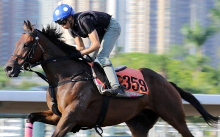 Shining On gallops on Sha Tin's all-weather track. Photo: Kenneth Chan