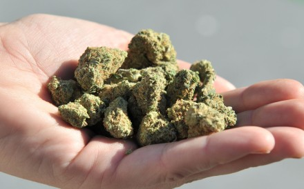 New Zealand is struggling to contain a synthetic cannabis epidemic. Photo: AFP