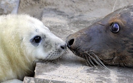 A baby seal at a zoo in Muenster, Germany. Photo: EPA