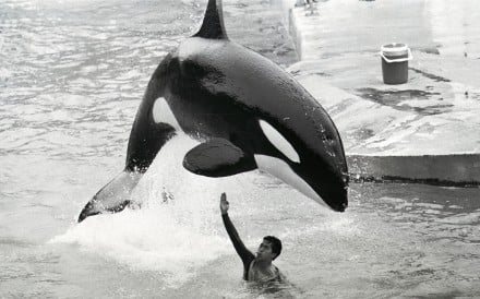 Hoi Wai performs at Ocean Park in 1989. Picture: SCMP