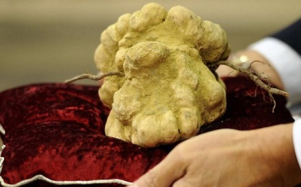 Alba White truffle from Italy, which was sold at auction for US$6,000 per kg, is among the world's 12 most expensive vegetarian ingredients. Photo: Luxurylaunches