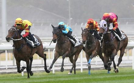 Shamport wins a barrier trial at Conghua. Photo: Hong Kong Jockey Club
