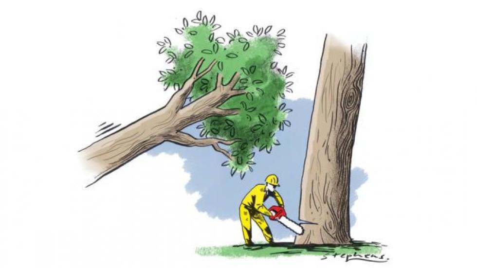 A Paragraph about Deforestation
