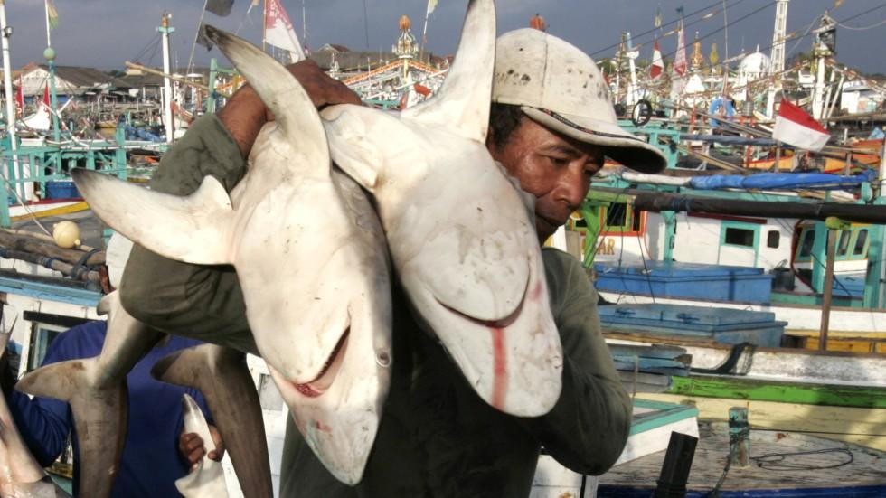 shark policy