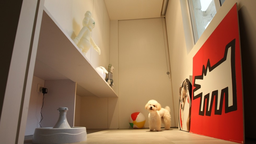 Hong Kong Pets Lap Up The Luxury In Own Rooms With Private Baths