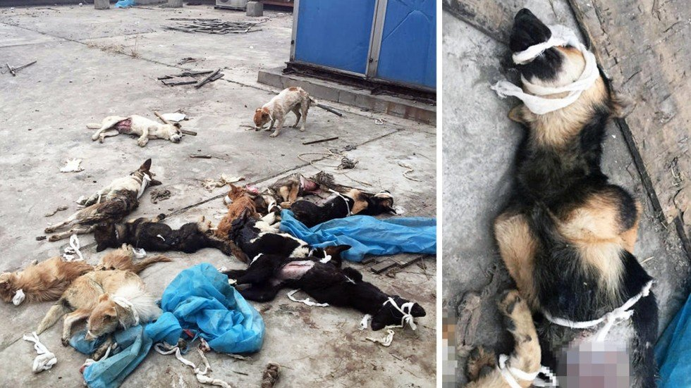Chinese Online Fury Over Photos Of Dead And Dying Dogs