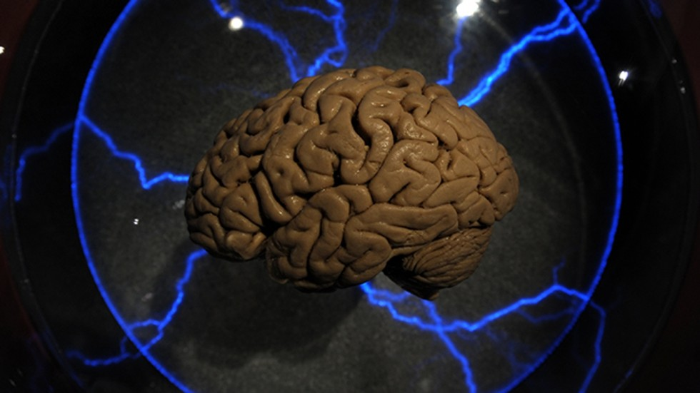 Why do our brains look like giant wrinkled walnuts western agence france presse ccuart Choice Image