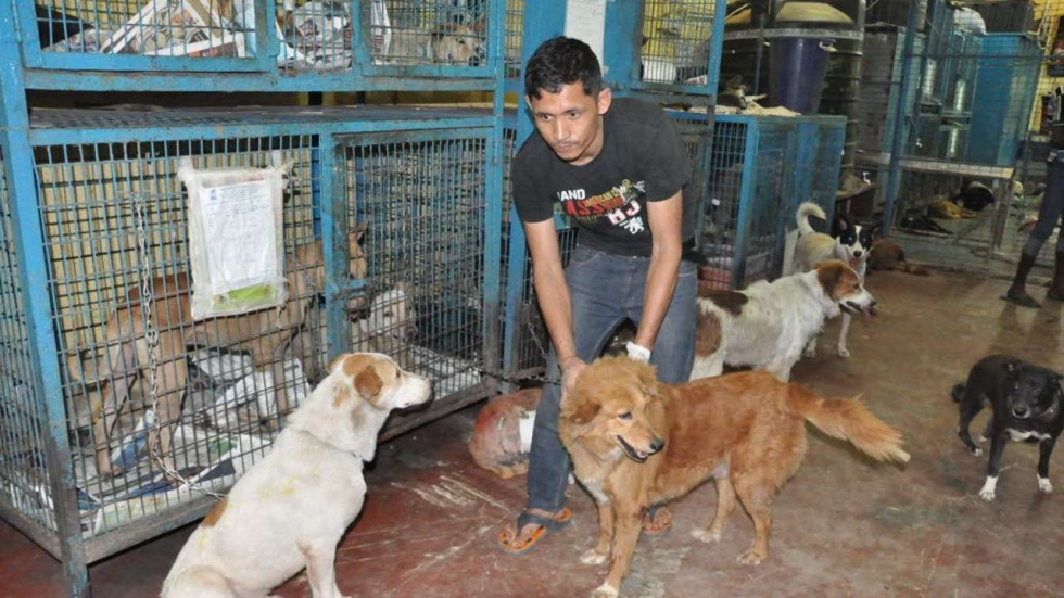 Cruelty against stray animals on the rise in India amid ...