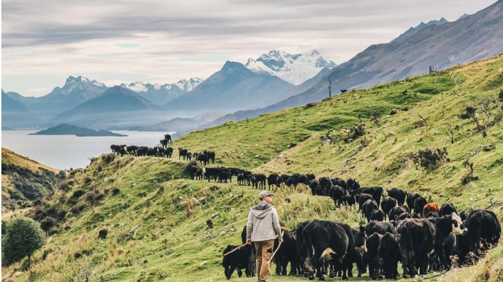 Hongkonger Tries Life On A New Zealand Farm As She Swaps