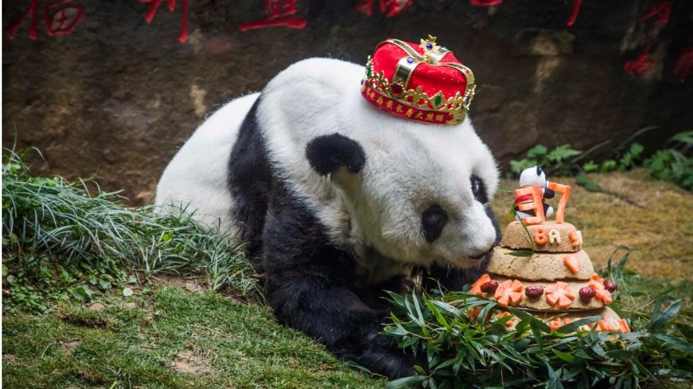 Sexual harassment panda scene drawing