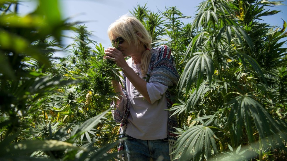 High Times Morocco S Growing Number Of Cannabis Tourists South China Morning Post