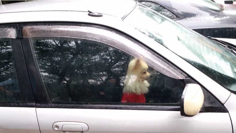 Hong Kong Man Gets 4 Weeks Jail For Locking Pet Pomeranian In Car