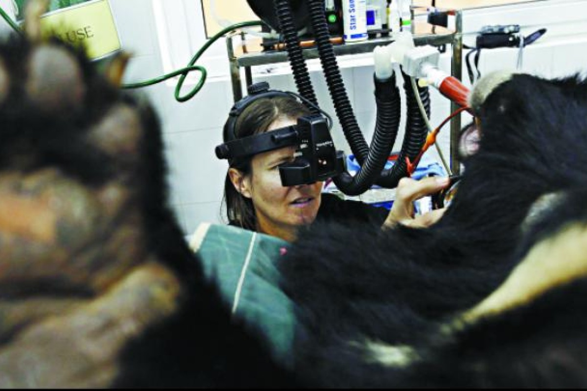 Veterinarian Kirsty Officer conducts an eye exam.