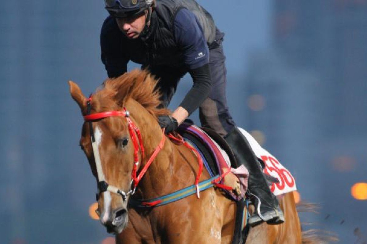 It Has To Be You has a gallop on the all-weather track at Sha Tin on Thursday. Photo: Kenneth Chan