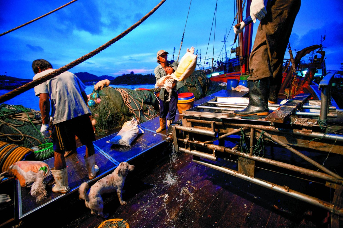 Dawn sees trawler fishermen in Phuket sort the previous night's catch.