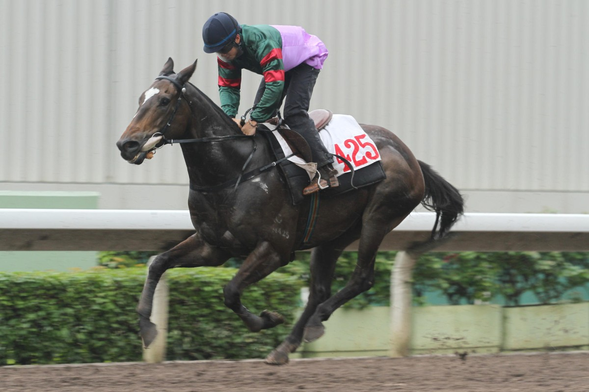Green Manner has yet to finish first past the post, although he is officially a winner, but he gets his opportunity to get his head in front today at Sha Tin. Photo: Kenneth Chan