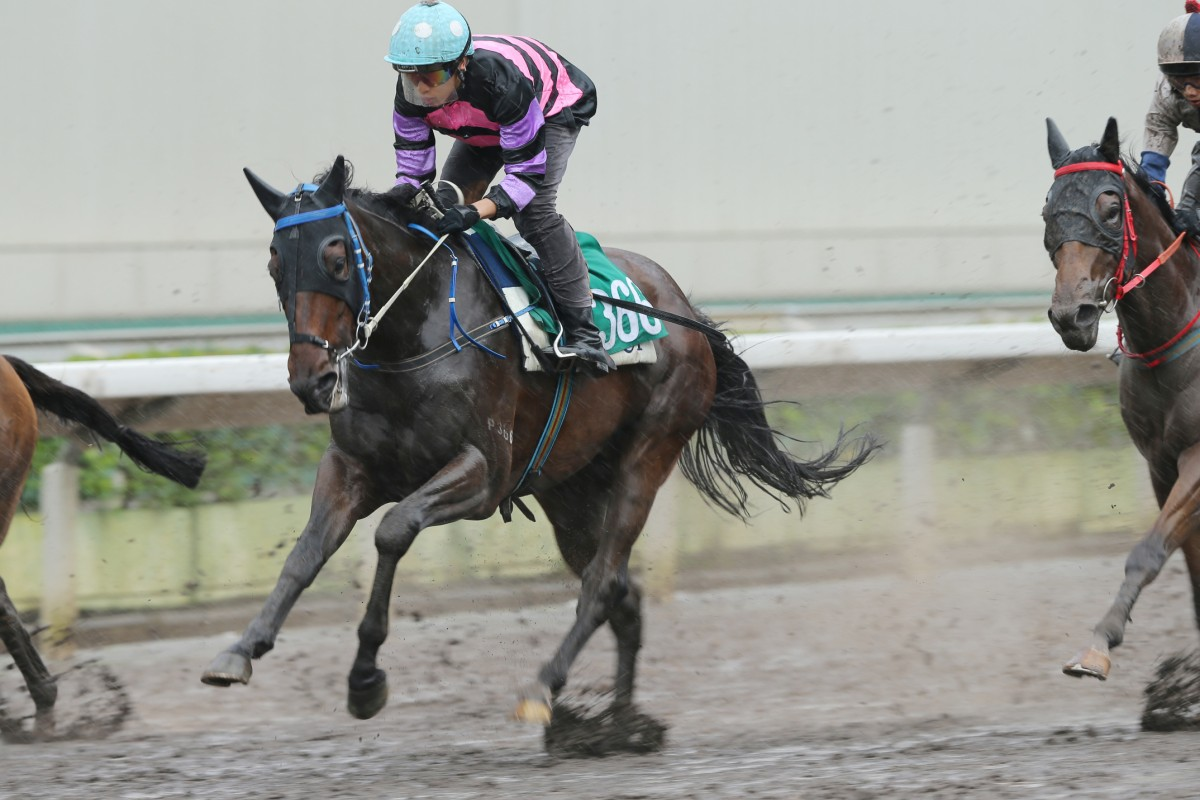 Caspar Fownes-trained Domineer has a perfect draw to win his race on Sunday. Photo: Kenneth Chan