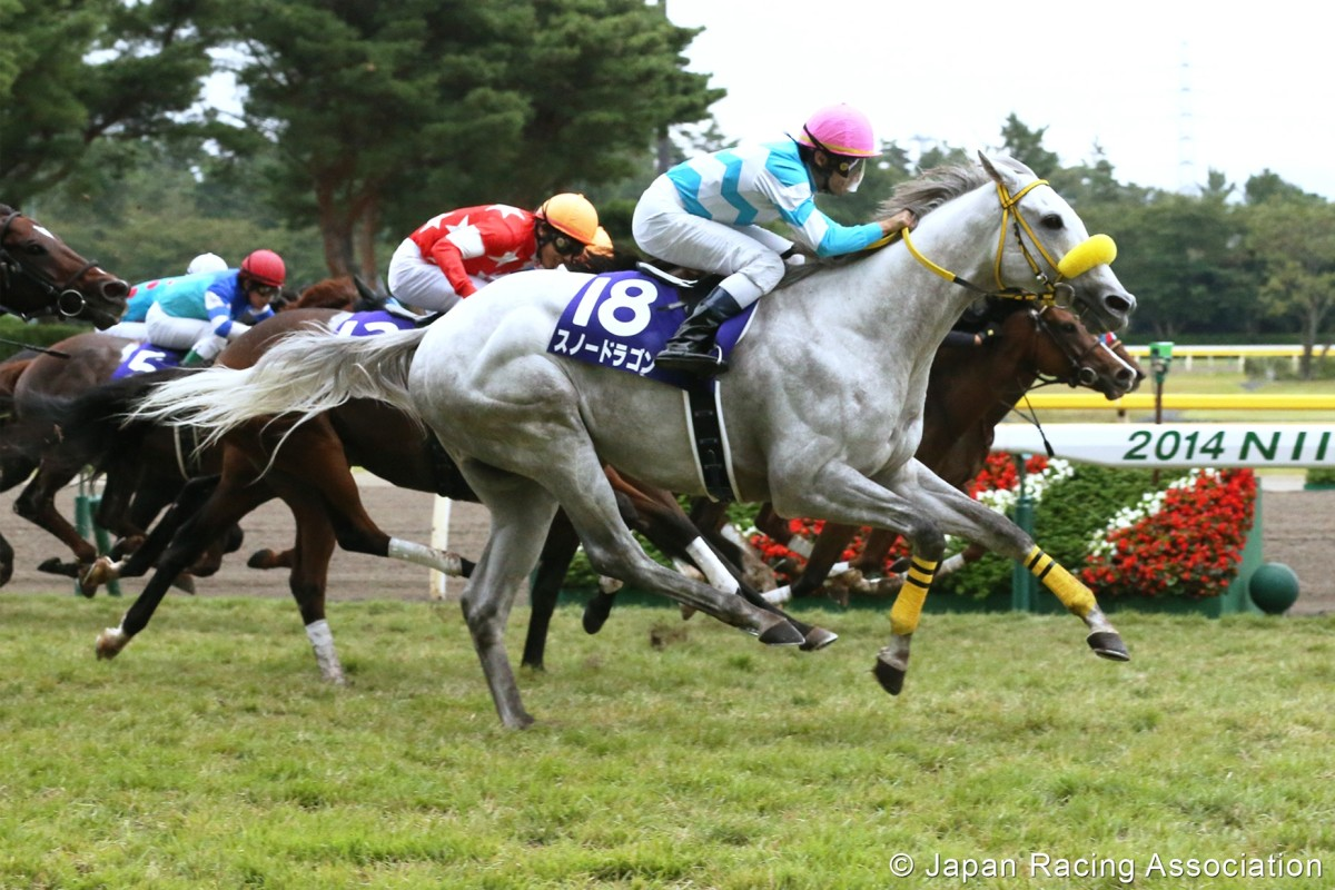 Snow Dragon wins the Sprinters Stakes at Niigata last month. Photos: JRA/Kenneth Chan