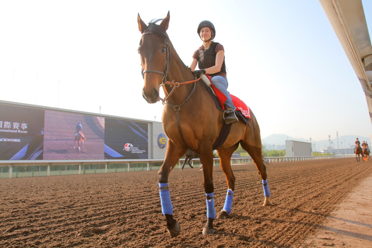 Cirrus des Aigles returns to Sha Tin for the sixth time as he looks to run in the Hong Kong Cup for the fourth time. Photo: Kenneth Chan
