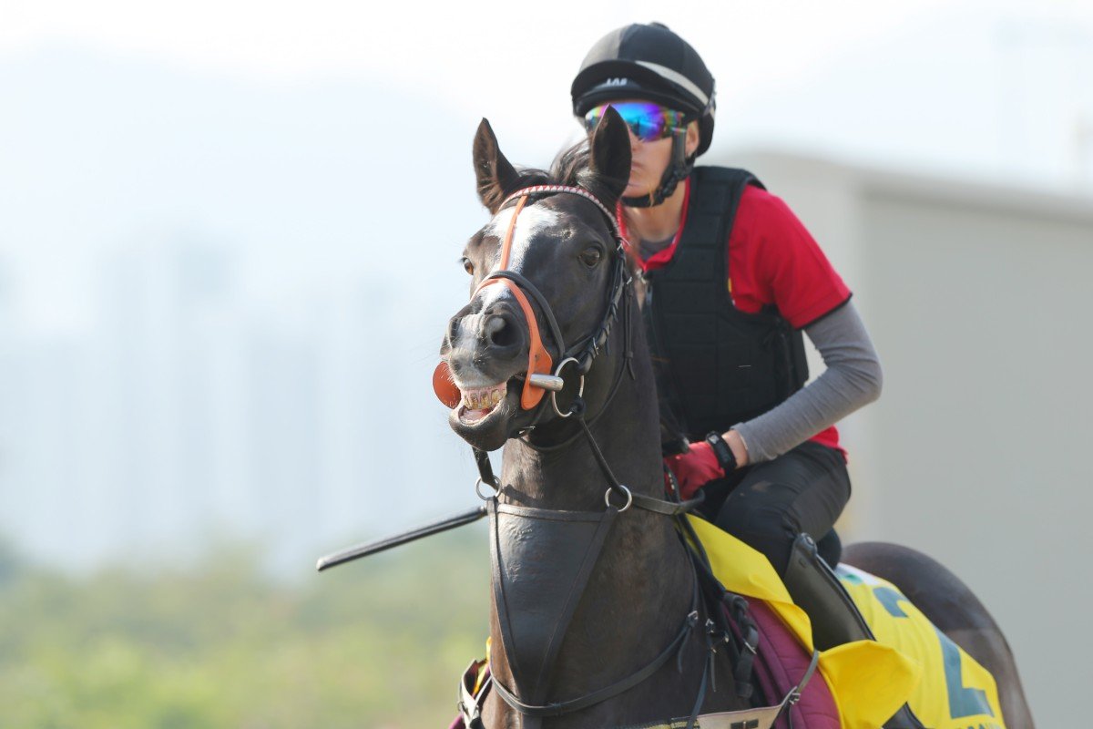 Sole Power is making his third trip to Sha Tin. Photo: Kenneth Chan