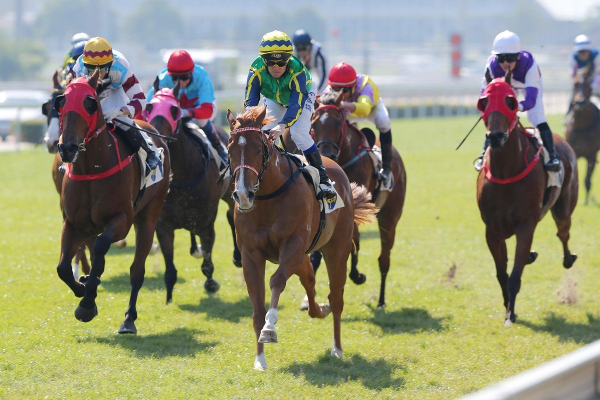 Blizzard won his first start down the much-maligned straight course at Sha Tin.
