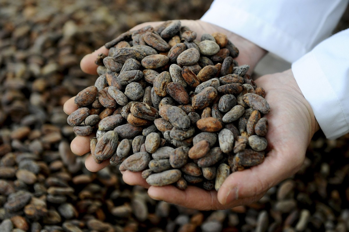 Organic cocoa beans are sorted at the Pacari factory in Quito, Ecuador. Photos: AFP; Kate Whitehead