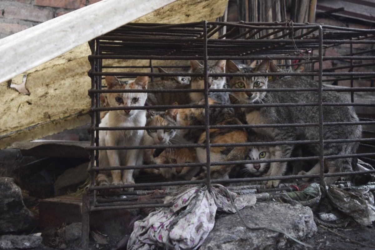 Cats await slaughter opposite the Quy Beo restaurant, in Va town, Bac Ninh province, Vietnam.