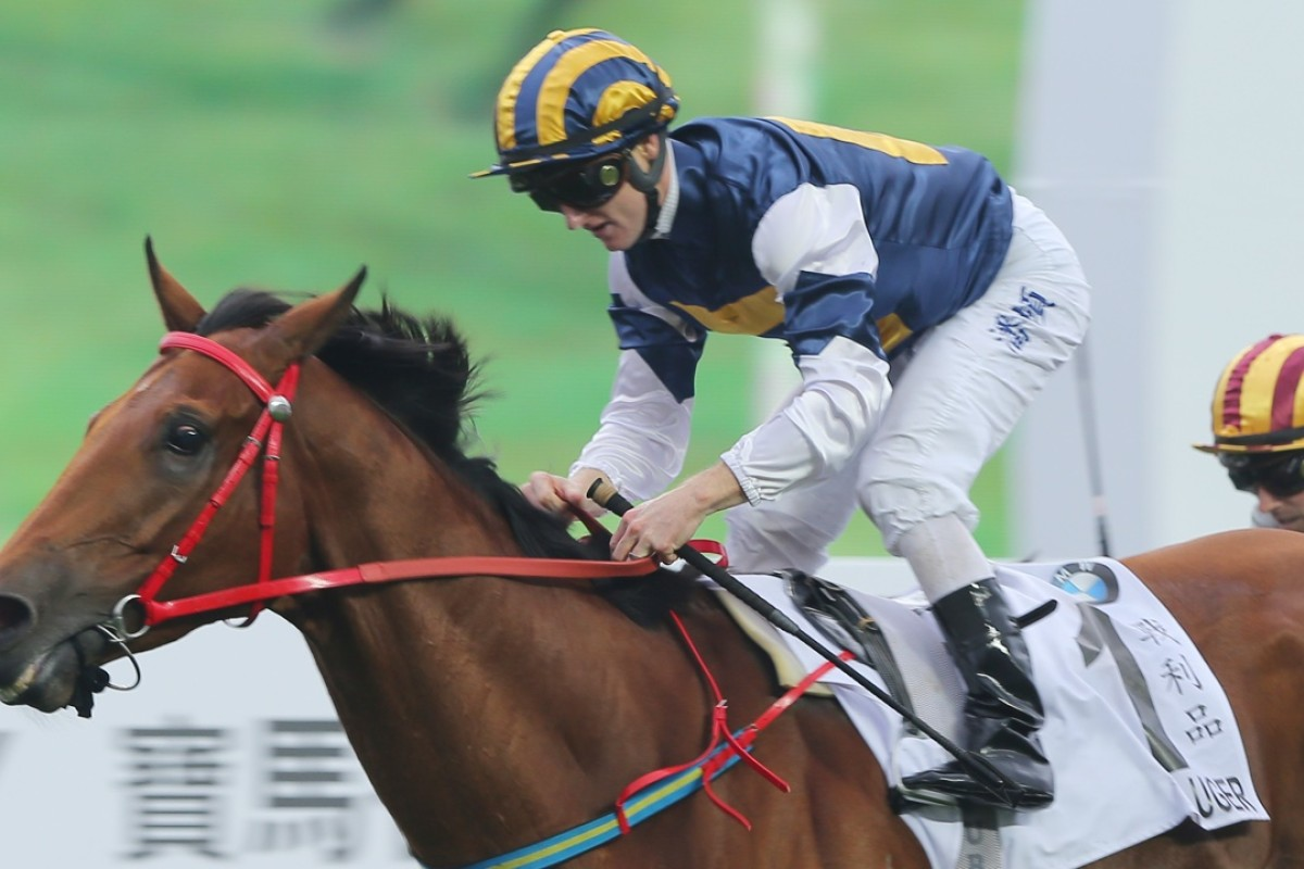 Luger won the Hong Kong Derby in March. He is set to run in the Stewards' Cup first-up in January. Photo: Kenneth Chan