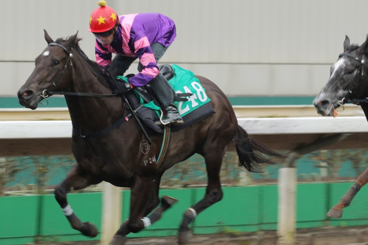 Rad, ridden by Douglas Whyte, has a work out on the all-weather track at Sha Tin. Photos: Kenneth Chan