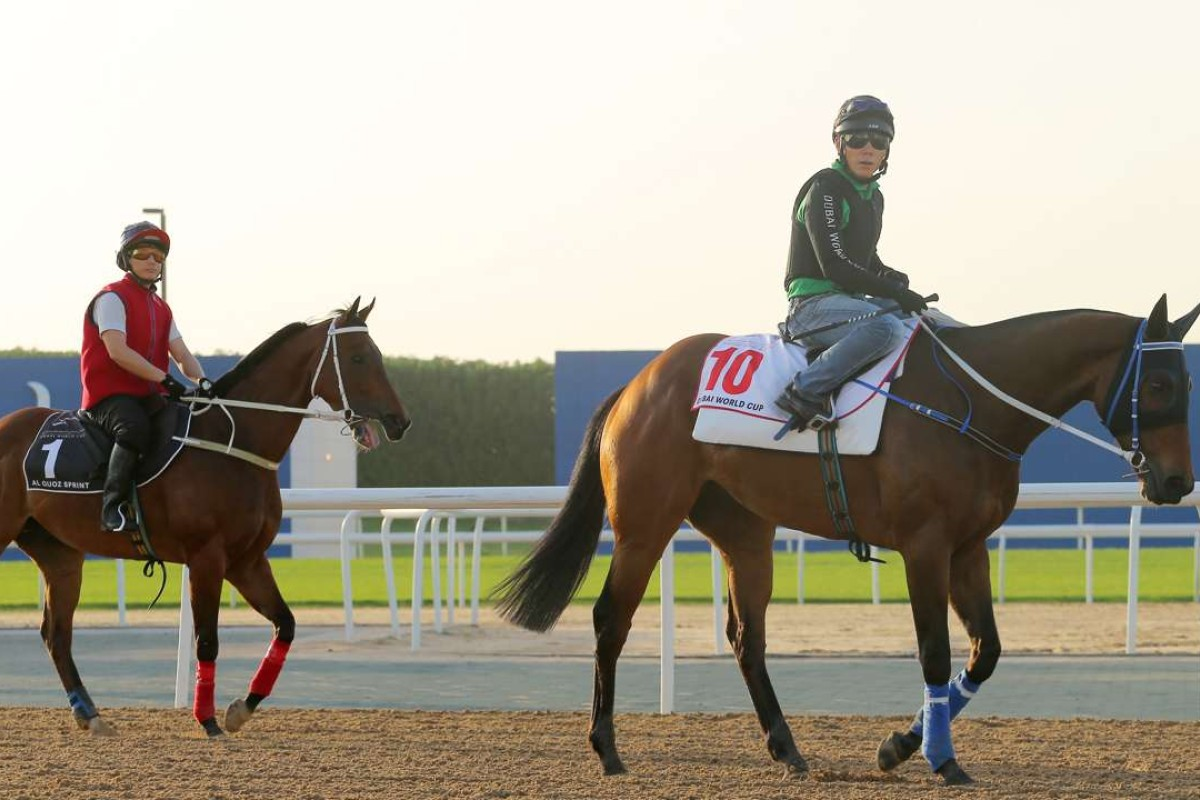 Gun Pit (right) and Peniaphobia go back to stable after gallop on the Meydan track in Dubai. Photos: Kenneth Chan