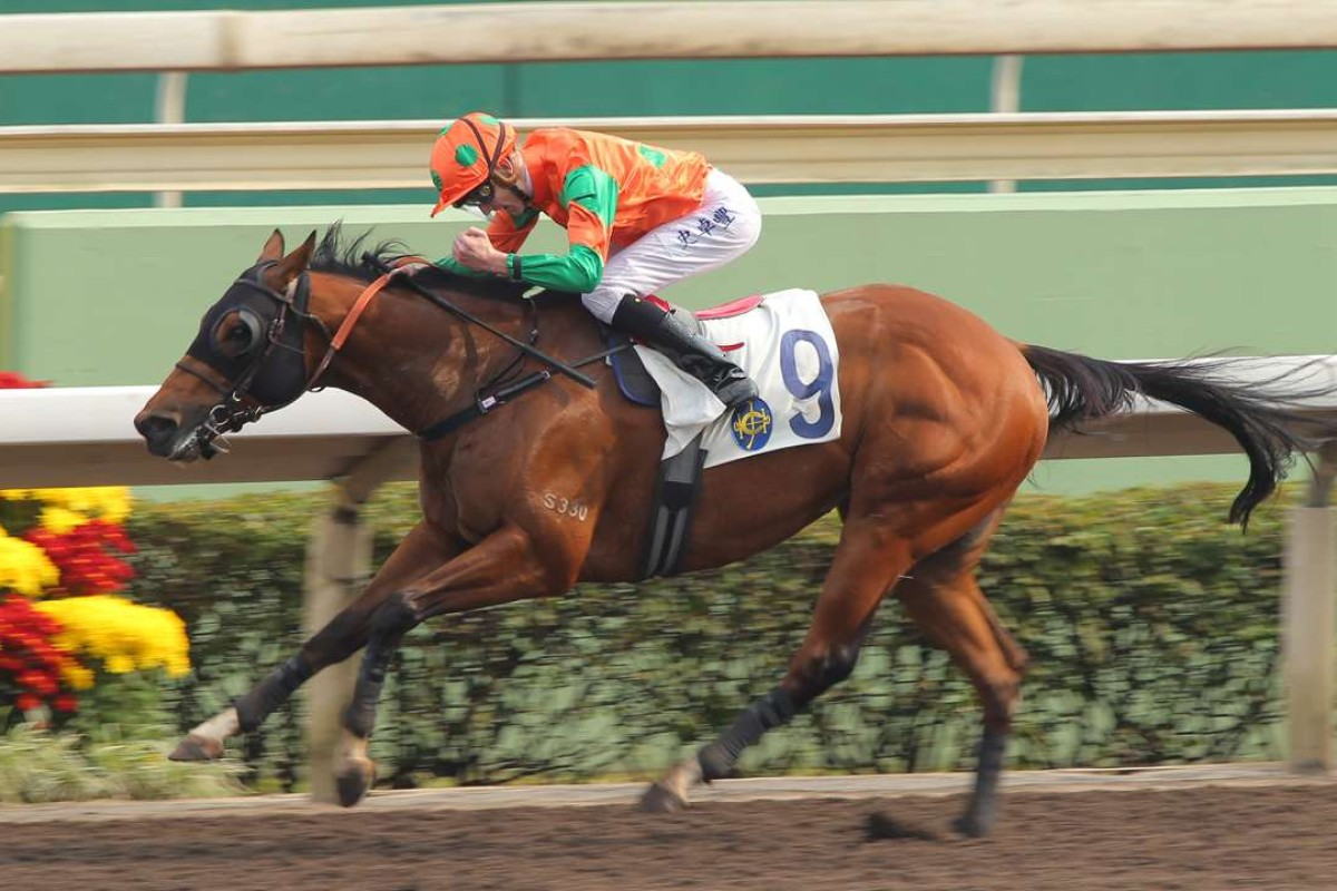 Ho Lee Horse wins impressively two starts ago with Chad Schofield aboard. Photo: Kenneth Chan