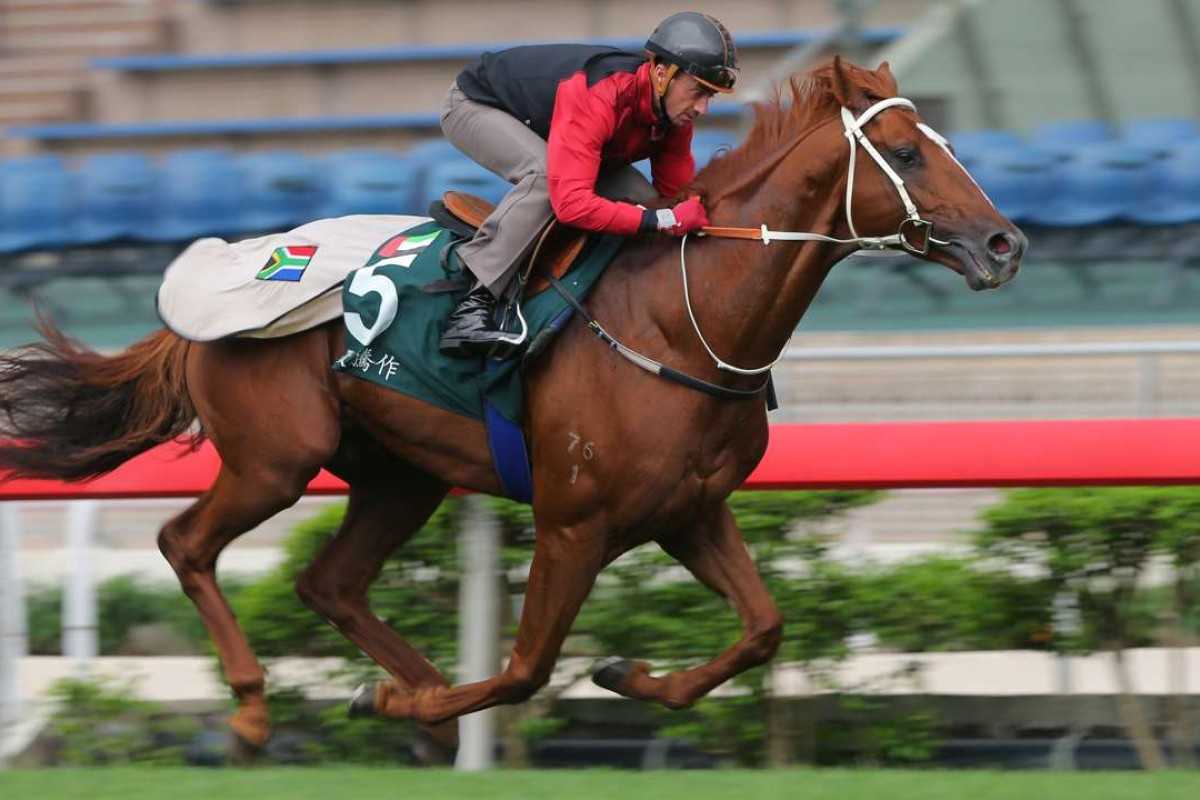 Douglas Whyte takes QE II Cup runner Ertijaal out for a breezy workout at Sha Tin on Tuesday. Photos: Kenneth Chan