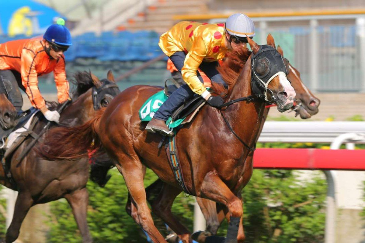 Gold–Fun is being readied for an assault on Royal Ascot later this month. Photos: Kenneth Chan