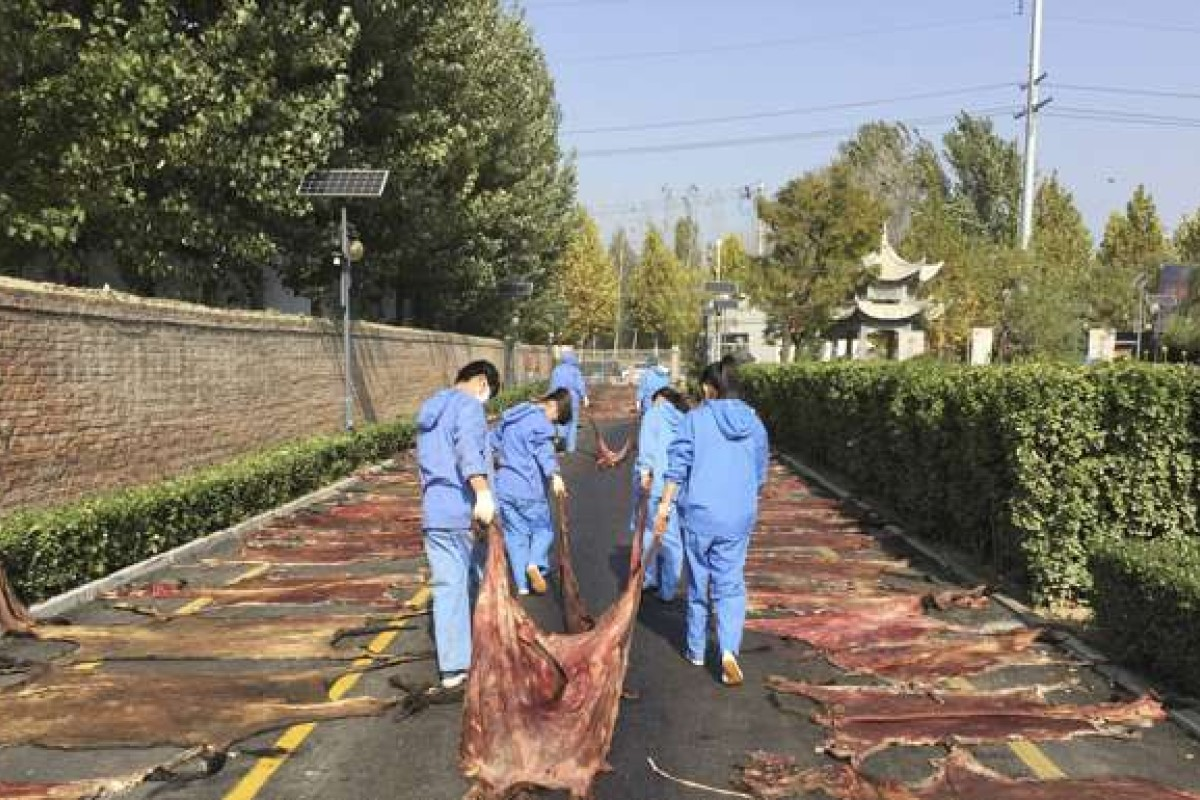 Workers lay the skins of freshly killed donkeys out to dry in Dong'e, northeast China, where they will later be boiled to produce gelatin sold as a health and beauty tonic. Photo: George Knowles