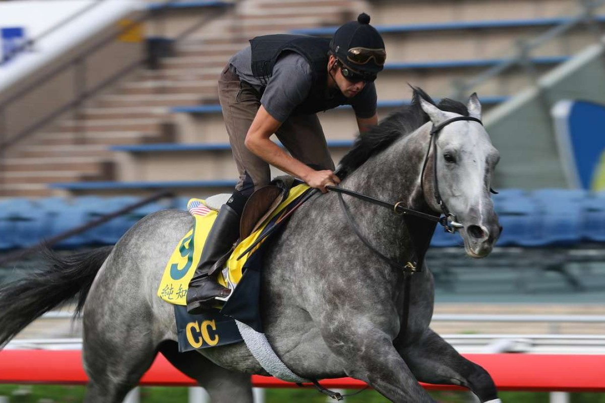 Pure Sensation galloping on the turf at Sha Tin. Photo: Kenneth Chan