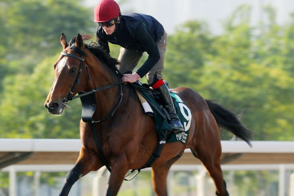 Highland Reel gallops on the all-weather track. Photos: Kenneth Chan