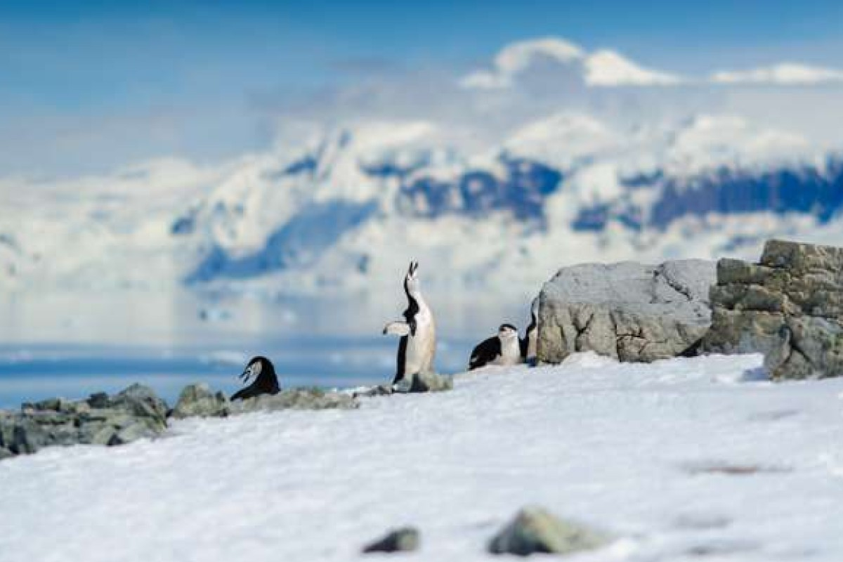 There is still a chance for travellers to see the natural landscape and wildlife of the Antarctic before the area changes.