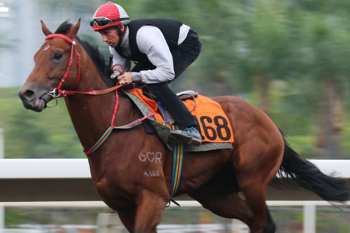 Nash Rawiller gallops Chung Wah Spirit on Sha Tin's all-weather track on Friday morning. Photos: Kenneth Chan
