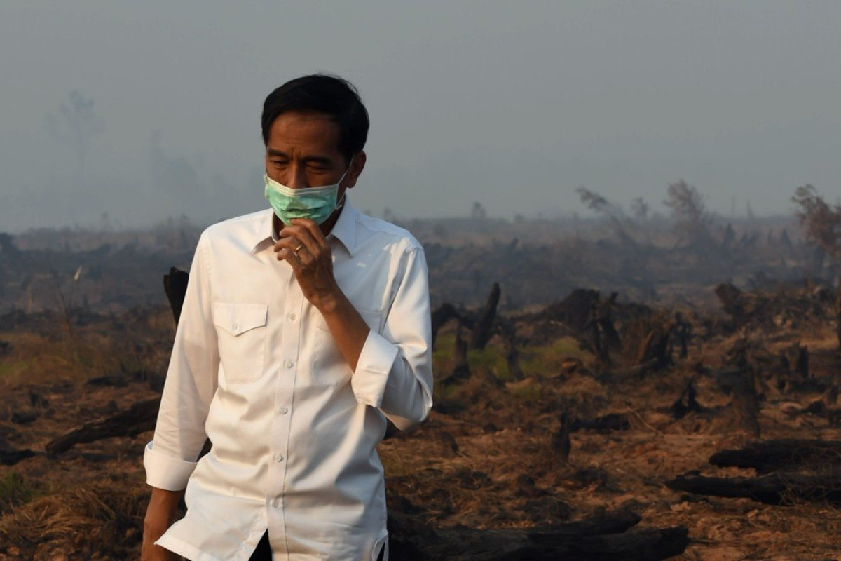 Indonesian President Joko Widodo inspects a peat land clearing after forest fires in 2015. Photo: AFP